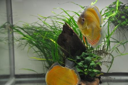 2009年4月新魚 032.jpg