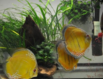 2009年4月新魚メキシカン 007.jpg