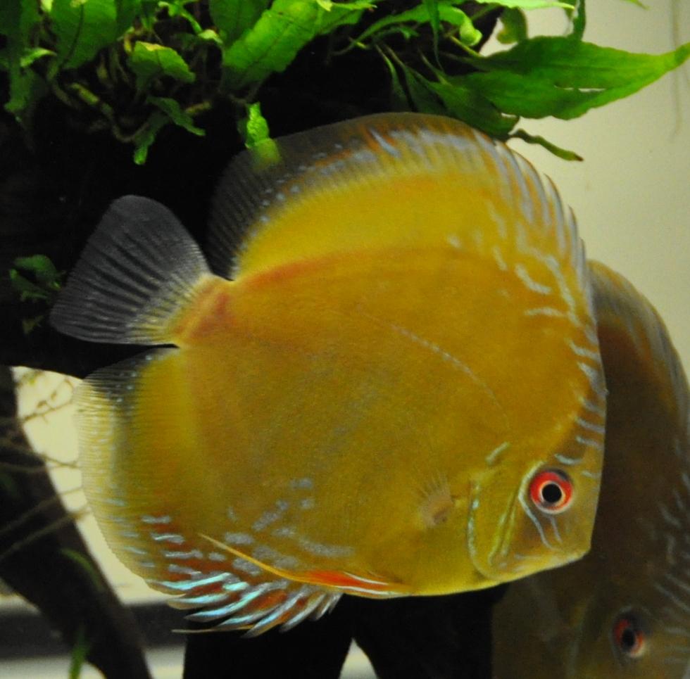 新魚3月 (33).jpg