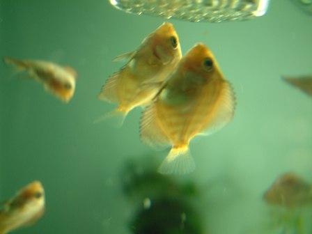 稚魚1ヶ月3週 (3).jpg