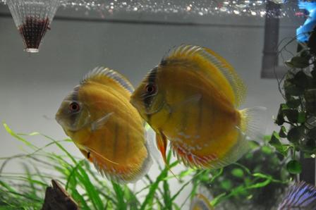 2009年4月新魚 メキシカン024.jpg