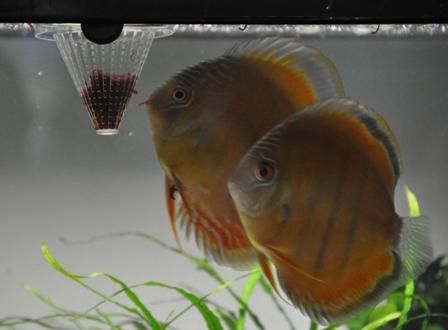 2009年4月新魚メキシカン 019.jpg