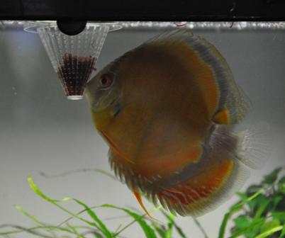 2009年4月新魚メキシカン 020.jpg
