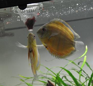 2009年4月新魚メキシカン 028.jpg