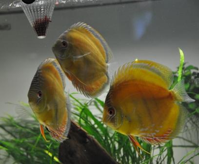 2009年4月新魚メキシカン 034.jpg