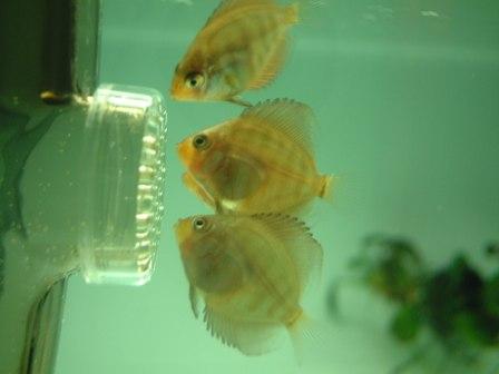 稚魚1ヶ月3週間 (8).jpg
